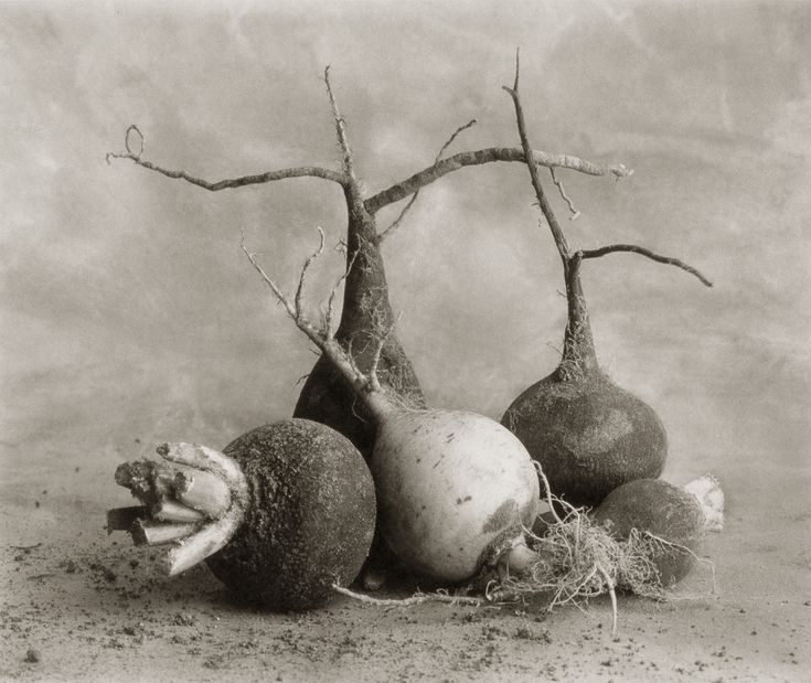 Black Radishes and One White One ©Cy DeCosse Fine Art Photography. The Beauty of Food Collection. Limited edition platinum-palladium print. CyDeCosse.com #photography #art #food