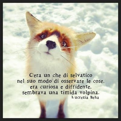 She was a bit wild in the way she used to look at things. She was curious and diffident like a small fox. la luna nel cuore la notte nel sangue