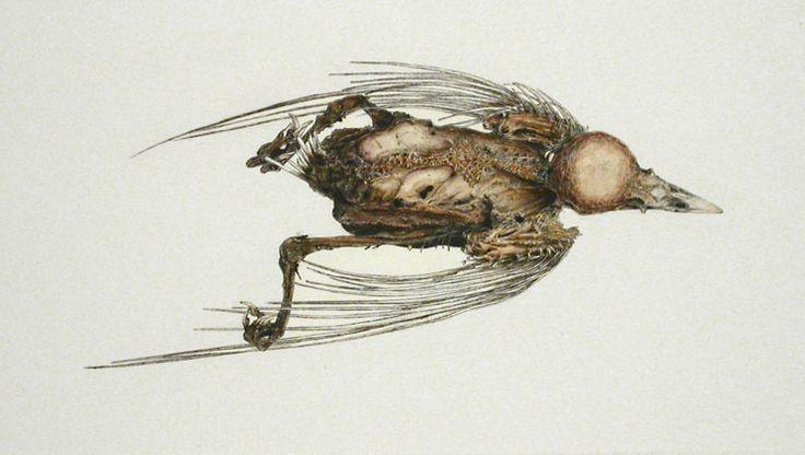 Arne Bendik Sjur. A Bird (30926), 2006. Drypoint with hand color. 1/1. 4 x 7-1/2 inches.
