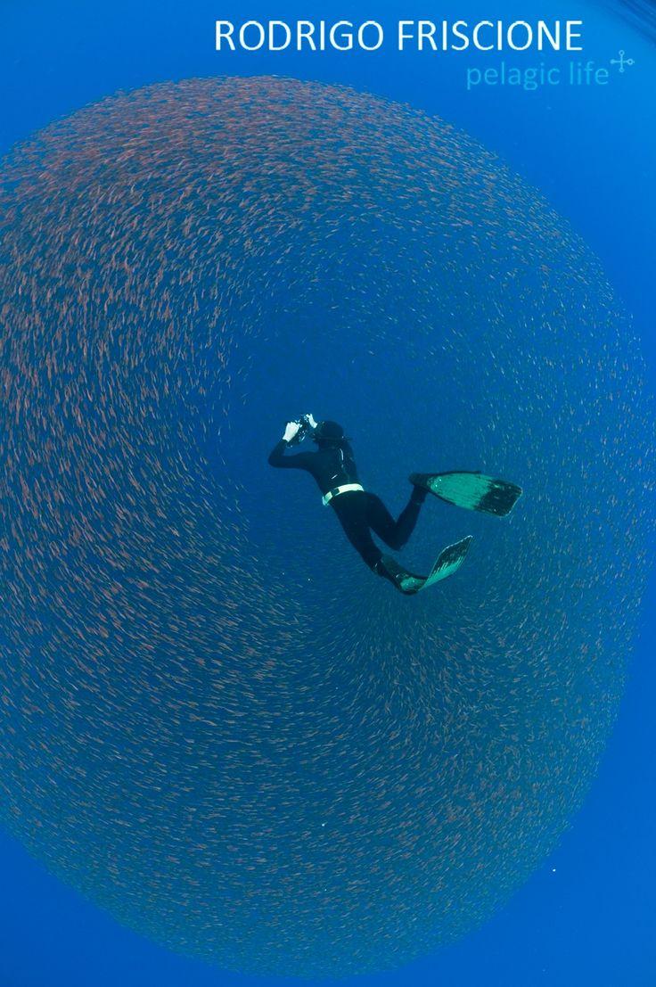 Feb'18: Socorro mit der Nautilus Explorer  #born2dive #oceanlovers #scubakids #touchedbynature #wirodive #tauchen #tauchreisen #erlebnisreisen #traumwirdwahr