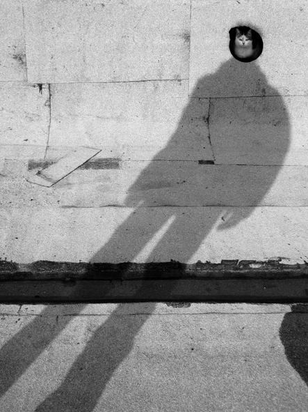 Alexey Bednij, Fotografías de Sombras.