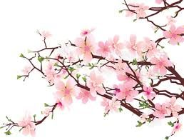 Image result for japanese haiku poems about cherryblossoms
