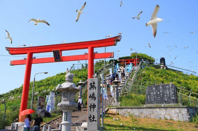 空から「運」が降ってくるウミネコ舞う八戸市 蕪島神社 | 青森県 | Travel.jp[たびねす]