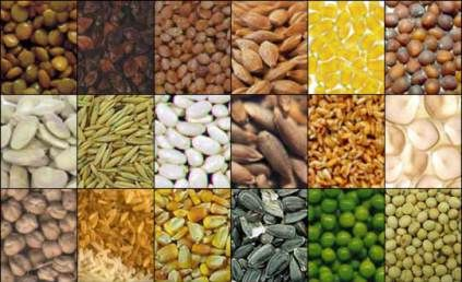 SONO PICCOLISSIMI MA ESTREMAMENTE RICCHI DI PROTEINE Fibre vegetali ed acidi grassi essenziali che li rendono in grado di aiutare l'organismo nella prevenzione di alcune delle malattie più temute. Si tratta dei semi, con cui poter arricchire la propria alimentazione aggiungendoli ad esempio al muesli della colazione o ad insalate e pietanze salate durante il…
