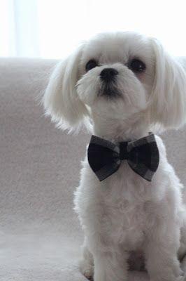 7 best teddy bear haircuts images on pinterest teddy