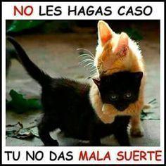 videoswatsapp.com videos graciosos memes risas gifs graciosos chistes divertidas humor http://ift.tt/2o1wz40 #videosgraciosos