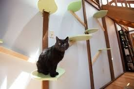 Image result for cat home