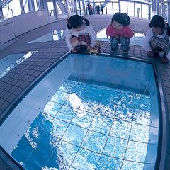 Looking down on massive whirlpools from floor window of O-Naruto Bridge.