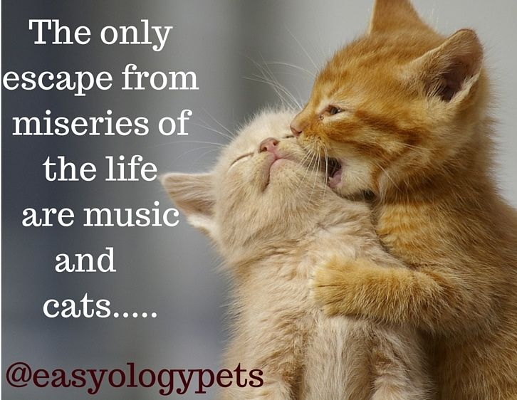The only escape from miseries of the life are music and cats! @easyologypets
