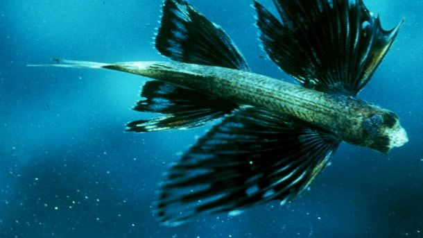 Fish Pictures, Pictures of Fish, Fish Facts - National Geographic