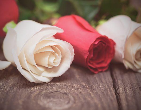 Pastel Roses  Photograph by Nadezhda Tikhaia   #NadezhdaTikhaiaFineArtPhotography #ArtForHome #HomeDecor #Flowers #InteriorDesign #FineArtPrints