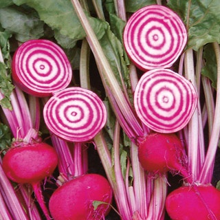 Chioggia Guardsmark Beet Seeds:  A super-sweet bite with a nice peppery afterbite.