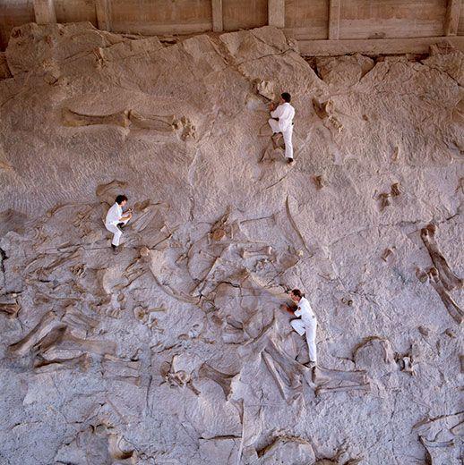Dinosaur National Monument—America's most celebrated dinosaur graveyard—in Dinosaur, Colorado