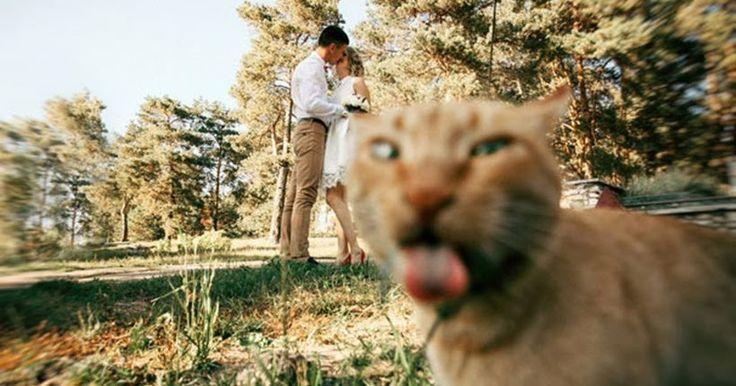 Όταν οι γάτες καταστρέφουν όμορφες στιγμές μέσα σε 10 ξεκαρδιστικές φωτογραφίες