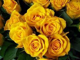 Resultado de imagen para figuras de rosas hermosas
