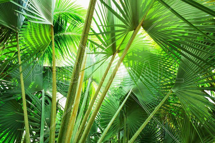 Palm Grove - Fototapety - Photowall