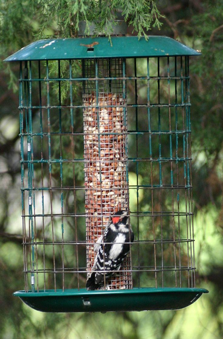 best 25 wild bird store ideas on pinterest bird suet wild bird