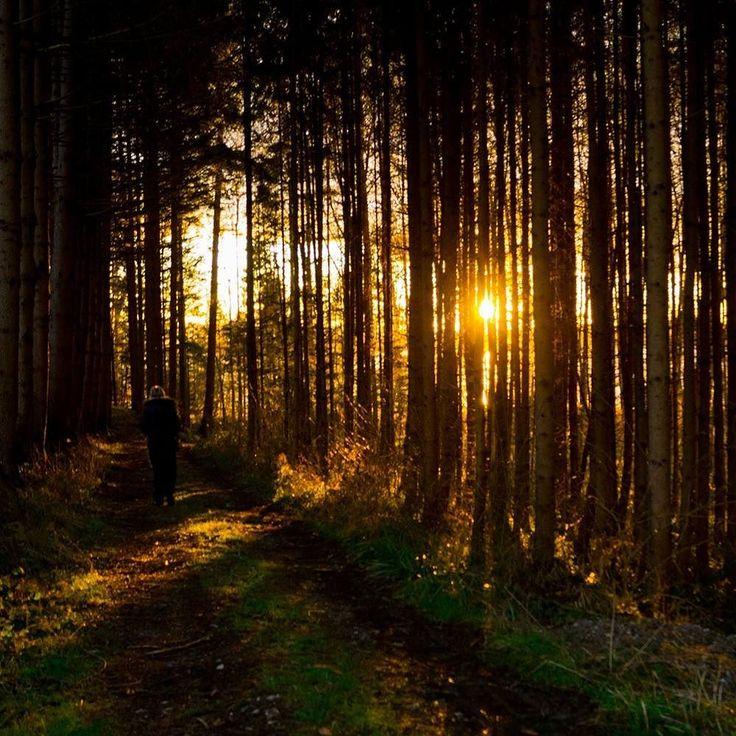 Heute gibt's Sonne pur... #chiemgau #simssee #bestgermanypics #bestofbavaria #wunderbaresbayern #deinbayern #exclusive_europe #ig_deutschland #meindeutschland #ig_bayern #ig_discover_germany #igersgermany #ig_worldclub #ig_discover_germany #igersgermany #naturelovers #ig_sunsetshots #sunset_stream #sunsets #tree_magic #exclusive_trees #sundowner #fantastic_earth #ourgermany