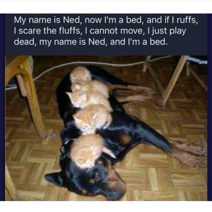 Cats_funny #Cats_breeds #Cats_cute #black_Cats #Cats_diy #Cats_photography    – memes lol