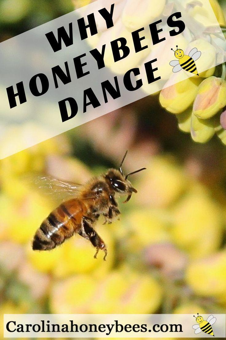 best 25 honey bee pollen ideas on pinterest bee keeping honey