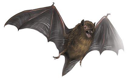 bat.png (425×273)