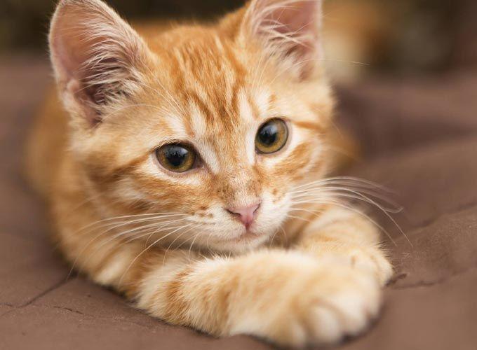 Comment interpréter le comportement de votre chat?Selon qu'il veuille se faire comprendre de l'Homme ou d'autres animaux,…