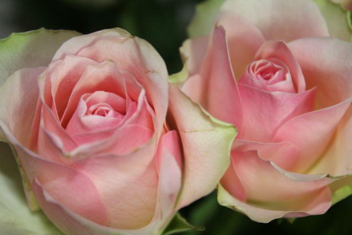 Roses #http://www.lookbackinvintage.co.uk/