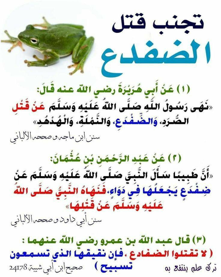 Pin By ريماس إبراهيم On حديث نبوى Quran Quotes Islamic Quotes Quran Hadith Quotes