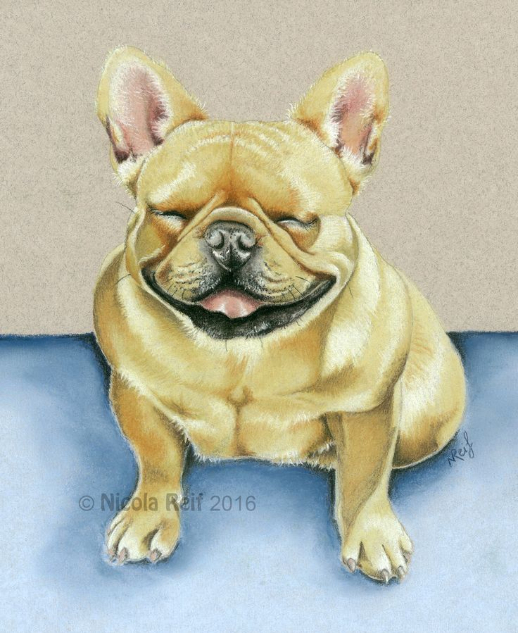 Dela The Smiling French Bulldog (Photo reference from owner). Pastel Pencil on Canson Mi Teints Paper.