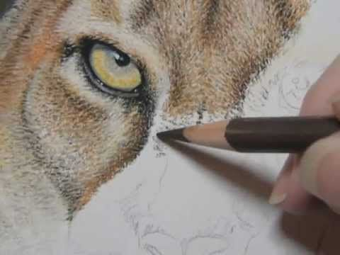 """Painting a Day Demonstration - Cougar by Roberta """"Roby"""" Baer PSA - YouTube"""