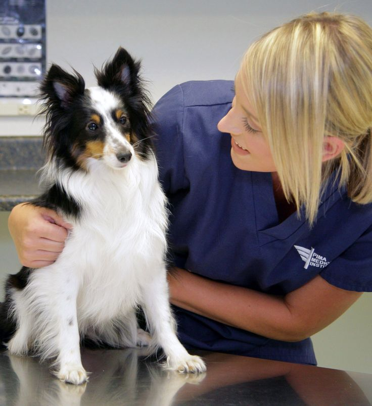 How to become a vet assistant?