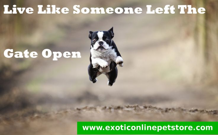 """Live Like Someone Left The Gate Open."" #gate #live #left #dogs http://www.exoticonlinepetstore.com/"