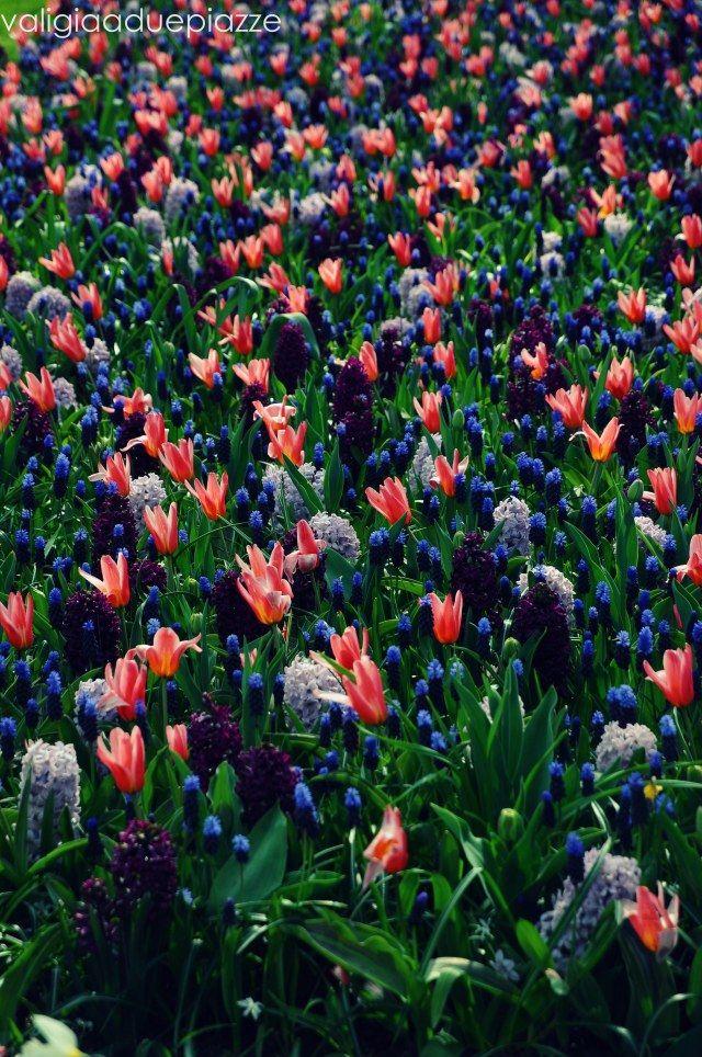 Olanda, i mille colori dei tulipani di Keukenhof