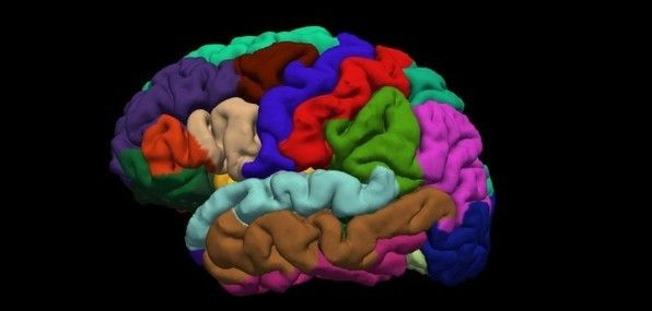 Chomsky was right, researchers find: We do have a 'universal grammar' in our head