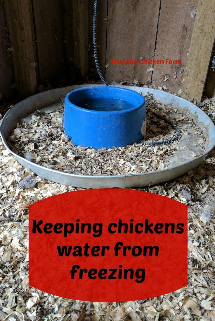 1431 best chicken coop images on pinterest backyard chickens