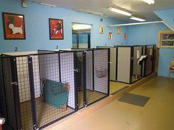 111 best Dog boarding facility ideas images on Pinterest | Dog ...
