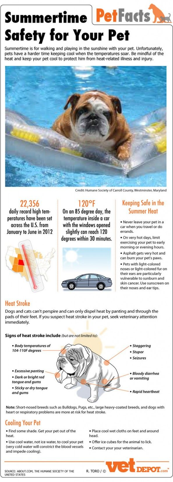 Summertime Pet Safety Infographic