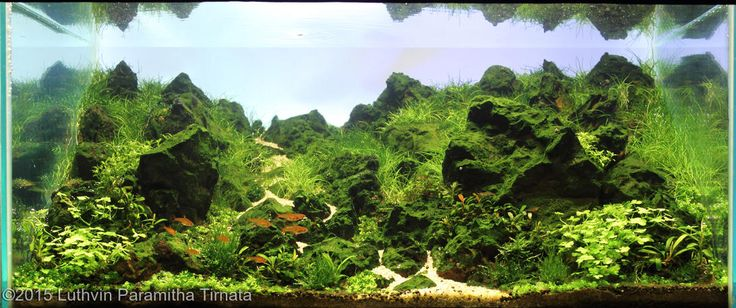2015 aga aquascaping contest entry 264 2015 aga aquascaping contest ...