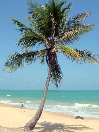 Coqueirinho, Conde (Paraiba - Brazil). Outra praia pra voltar!