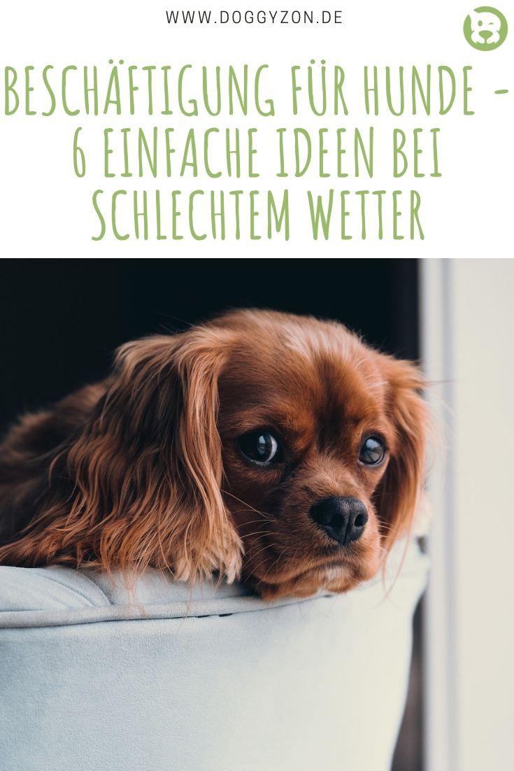 Beschaftigung Fur Hunde 6 Ideen Bei Schlechtem Wetter Beschaftigung Fur Hunde Hunde Tricks Fur Hunde