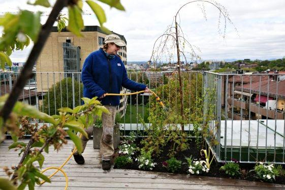 Gartner på taket