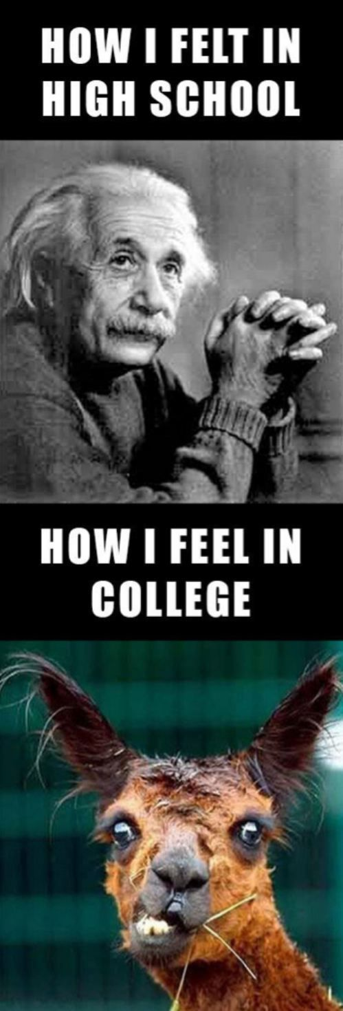 "Except this should say ""how I felt in undergrad"" and ""how I feel in grad school"""