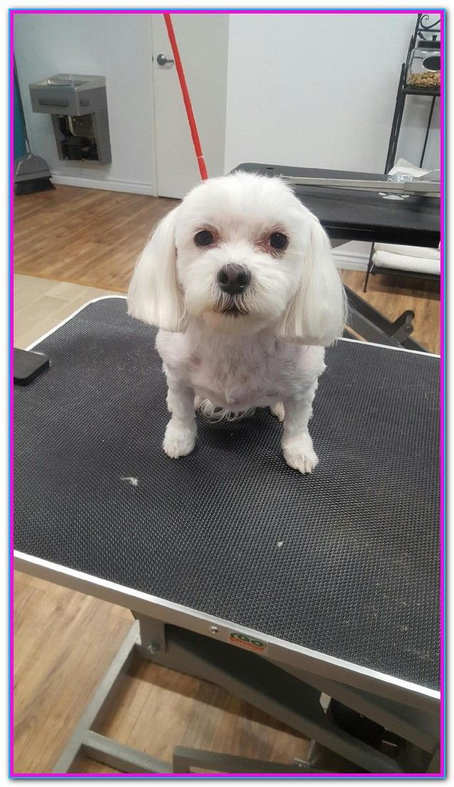 San Diego Dog Grooming Coupons Reviews On Cheap Dog Groomer In San