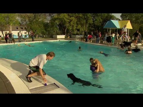1000 Ideas About Dog Swimming Pools On Pinterest Dog Pools Weenie Dogs And Dog Ramp