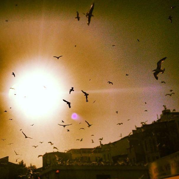 #istanbul #gull #sunset