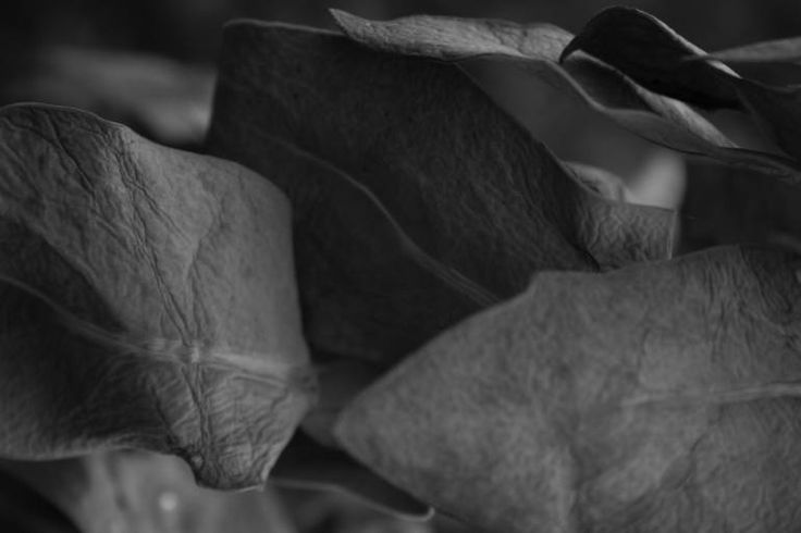"Saatchi Art Artist Johann Kruger; Photography, ""Leaves"" #art"