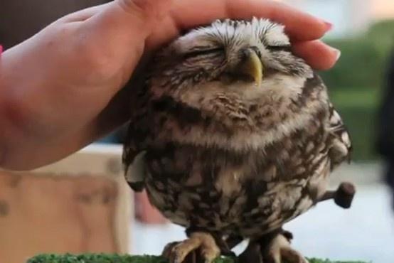 A Cute Owl A Cute Owl A Cute Owl