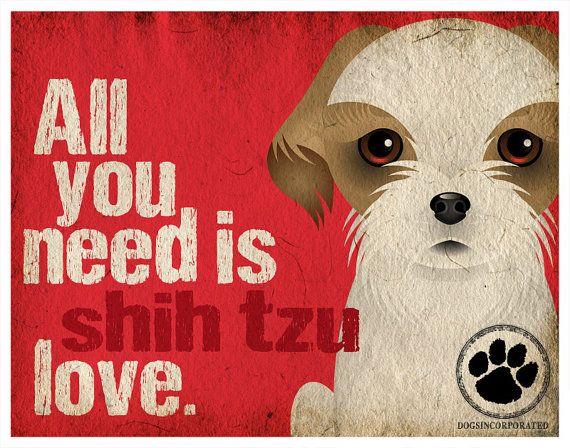 Shih Tzu Art Print  All You Need is Shih Tzu