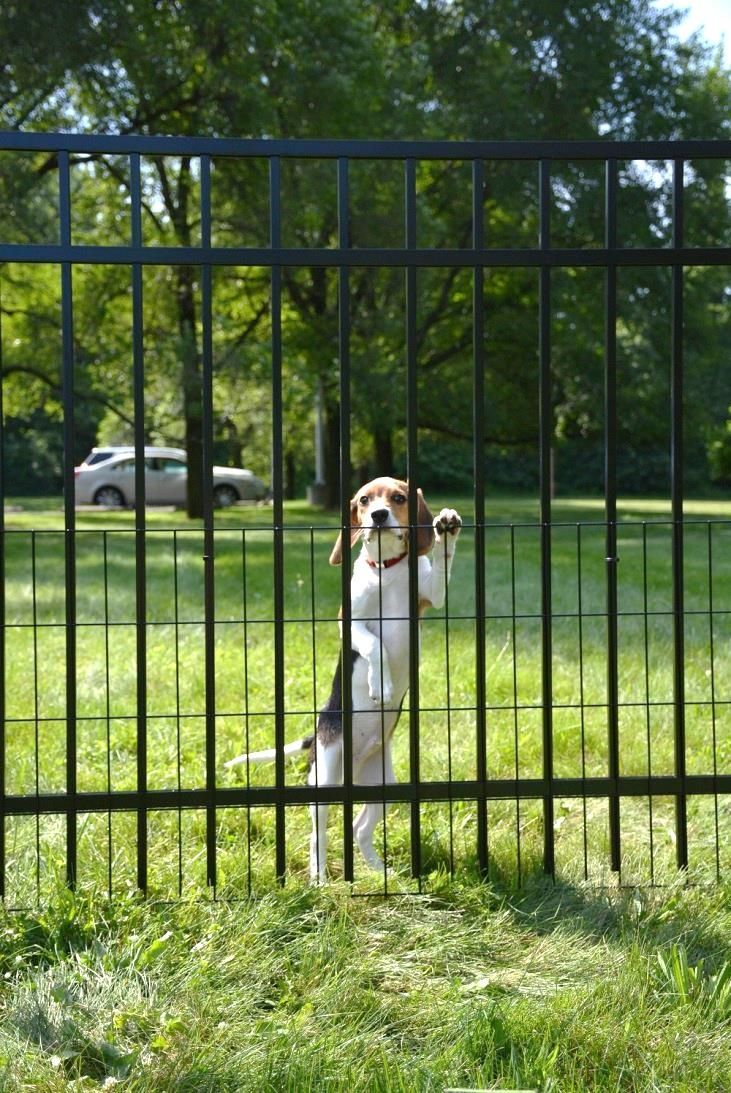 Puppy Gates For Small Dogs