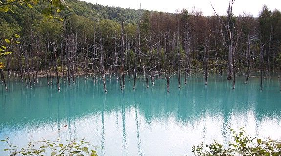 Furano Travel: Blue Pond (Aoiike) The Blue Pond (青い池, Aoiike) outside the hot spring town of Shirogane Onsen